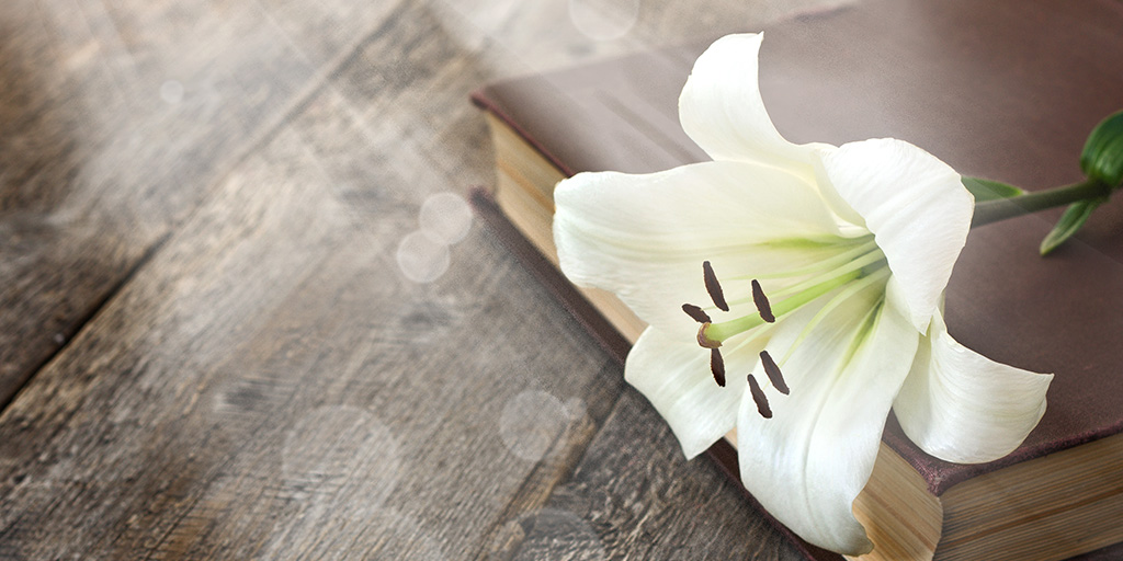 easter lily on bible with light shining through